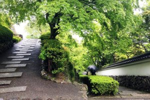 One of the many switchbacks between the bottom gate and the temple proper. If you are so unfit that you die making this ascent, at least you die happy in the knowledge that you have seen one of the most beautiful gardens in Japan.