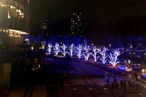 Illuminated trees line the street