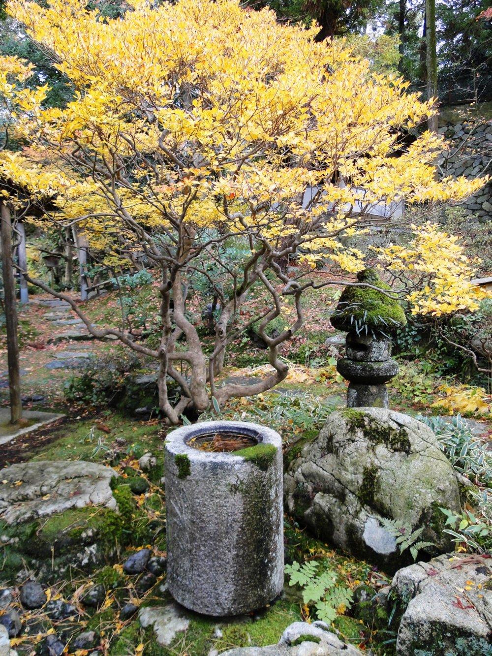 A uniquely-shaped chozubachi(water basin) in the garden