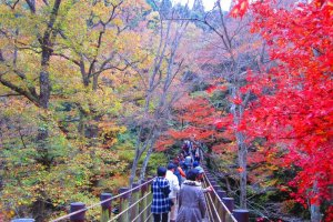 A group of tourists wanders across the suspension bridge to view the foliage