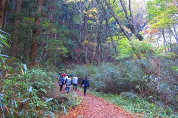 A nice hike through the woods in a the cool autumn air