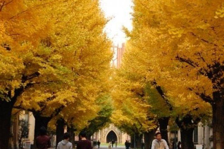 Musim Gugur di Universitas Tokyo