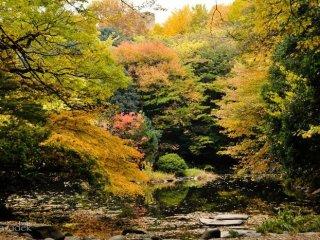 Warna-warni musim gugur di Sanshiro-ike yang sudah ada sejak dari zaman Shogun!