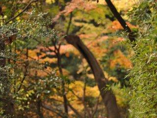 Salah satu sudut taman yang mengelilingi Sanshiro-ike
