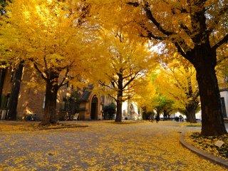 Daun-daun yang berguguran di lantai ini biasanya dibiarkan dan tidak disapu dalam jangka waktu tertentu, untuk memberikan suasana musim gugur yang indah