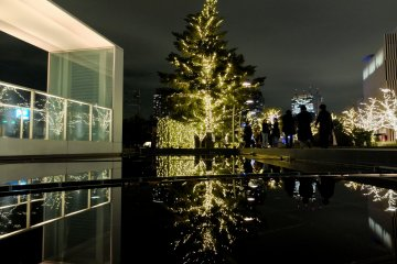 <p>어둠속에서 빛나는 나무는 공원 가까이에 있는 물 위에 멋진 모습을 반사한다.</p>