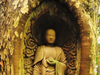 普通、仏像は伐採し乾燥した木に彫刻するものだが、この仏像は生きている木に彫られている