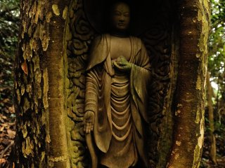 """生きた木に高さ60cm、幅20cmの大きさに彫刻された""""生き木地蔵(いききじぞう)"""""""