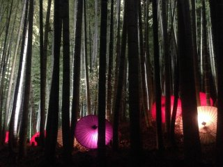 A Japanese umbrella light display scattered in the bamboo forest