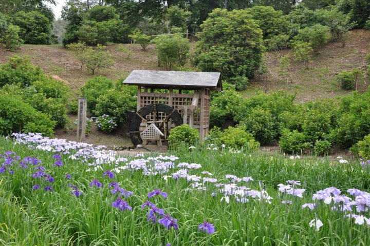 Yokosuka's Shobu-en Park