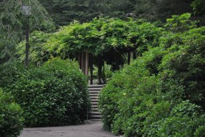 الطريق إلى نقطة استراحة أشجار الوستارية