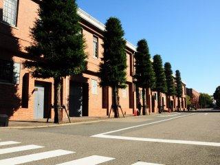 Deretan pohon yang berjajar rapi di sekitar museum