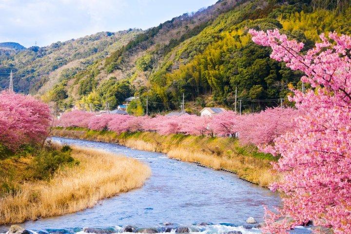 花見と温泉が楽しめる河津温泉郷