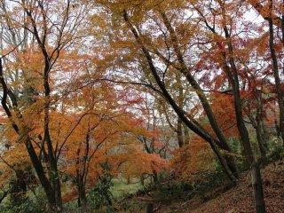 盛りの頃にはさぞかしまばゆいばかりの紅葉であっただろう