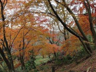枯れ始めの紅葉もまた「いとおかし」の風情である