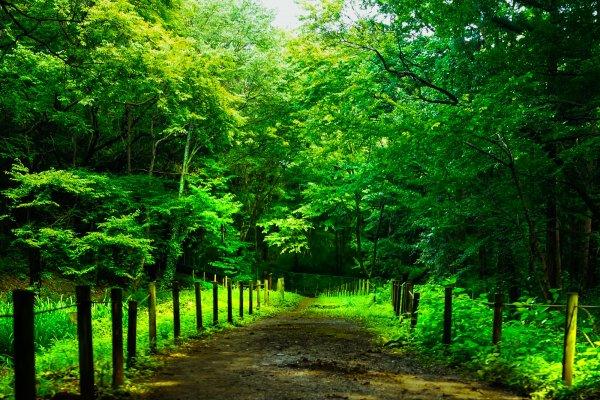 狭山丘陵 初夏のトトロの森
