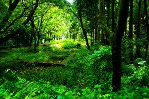 財団やボランティアの方々のおかげで、きれいに保たれている森