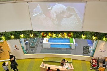 <p>Pecos is the large pet shop at the Pet Mall that not only offers supplies, but water therapy for dogs that must be rehabilitated.</p>