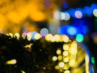 LED 보케샷