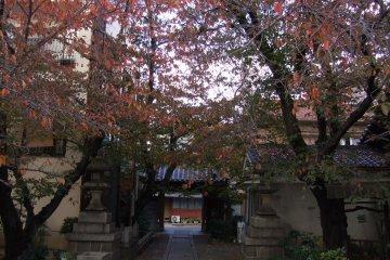 墨染寺 薄墨桜と人の心