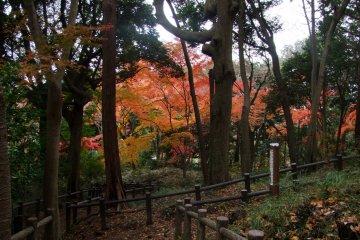 Красивые краски осени