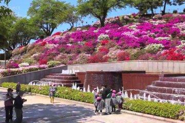 니시야마 공원의 진달래 천국
