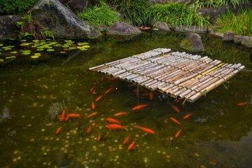 일본에서 자주 볼 수 있다: 연못에 동전을 넣은 금붕어