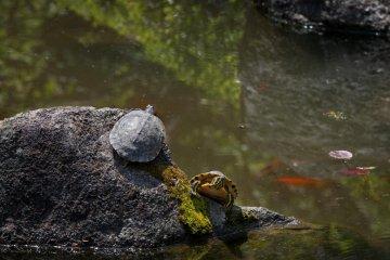 거북이도 드물지 않다