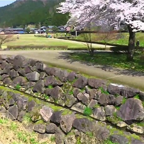 Руины Итидзёдани в цветах Сакуры