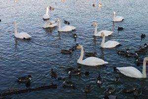 Разные птицы живут в гармонии