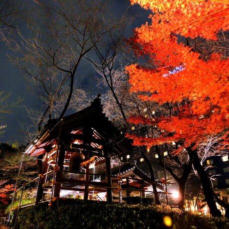 Lit-up Garden of Hotel New Takanawa