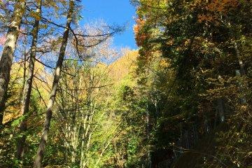 호수와 후지산은 기다릴 수 있었다. 먼저 나는 가을을 만끽하고 싶었다
