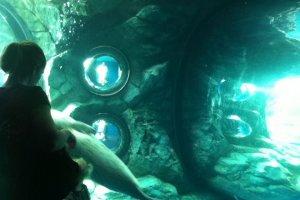 Bể quan sát hải cẩu