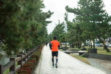 <p>Jogging or walking among the trees is an enjoyable activity</p>