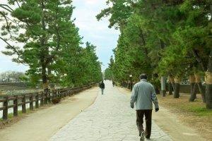 草加松原 松並木の遊歩道。