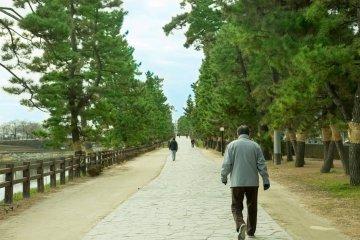 <p>The pine tree-lined paths of Soka Matsubara</p>