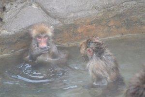 お猿さんも温泉に入っています あったかそう!