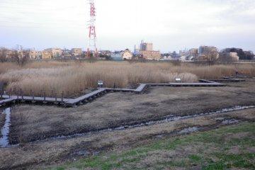 """Водно-болотные угодья """"Первого регуляционного резервуара WaterLand"""" на реке Каногава рядом с парком Михаси."""