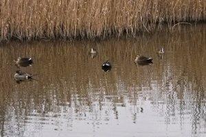 연못에서 쉬는 새들