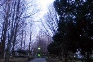 여름철에는 작은 나무들이 직사광선을 차단해 시원한 느낌을 줍니다. 조깅코스는 조깅하는 사람 외에, 개와 함께 산책을 자주 합니다