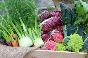 肉のジューシーさとよく合う味の濃いイタリア野菜。紫色で程よい苦みとシャキッとした歯ごたえが特徴の野菜、ラディッキオがおすすめ。