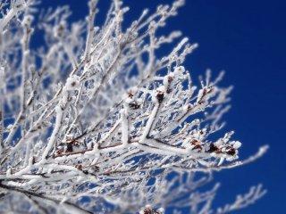 Покрытые льдом ветки на фоне голубого неба