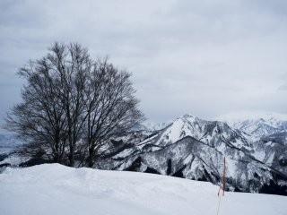 Hình ảnh của một cây thông đơn độc giữa những ngọn núi hùng vĩ