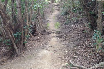 <p>The path is quite well cleared.</p>