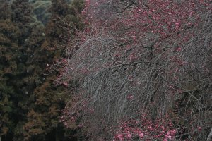 There are an abundance of trees around Kintaibridge, and except for the middle of winter, they will have some type of bloom or beautiful leaf to enjoy.