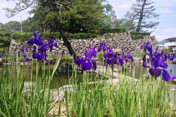 <p>Irises frame one of the many gardens here.</p>