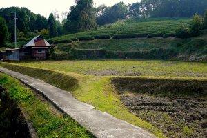 Чайные плантации Удзитавара