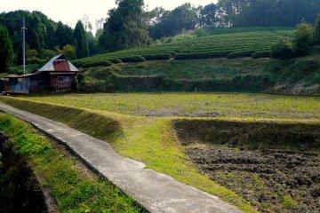 <p>Чайные плантации Удзитавара</p>
