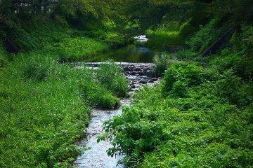 <p>Милый ручеек под названием Тамагава вытекает из-за холмов в Идэ</p>