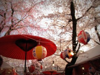 Let us start with Hirano Shrine; in April it feels as if the shrine gets itself a new roof made of baby pink blossoms.